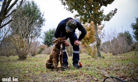 The Truffle Festivals 'Blessing of the dogs' at Tarago Truffles