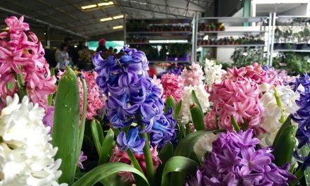 Capital Region Farmers Markets