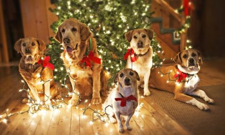 CHRISTMAS DOG PARTY