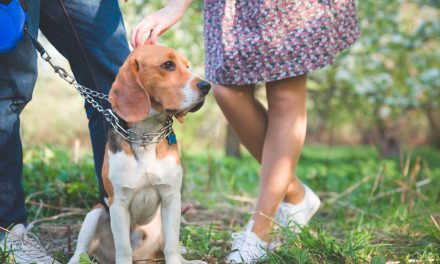 RSPCA Million Paws Walk: Walk to fight animal cruelty