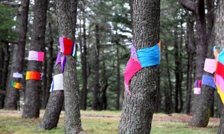 Warm Trees breathes colour into National Arboretum