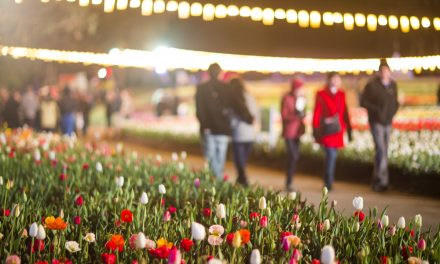 NightFest: Floriade's after-dark experience is back!