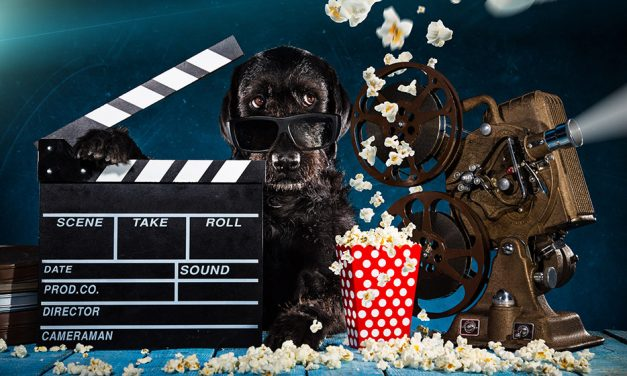 Take your dog to the movies