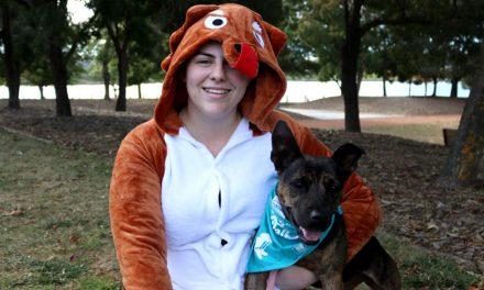 Doggo dress-up for Guinness Record