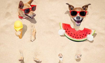 6 tips to keep your pets cool this summer