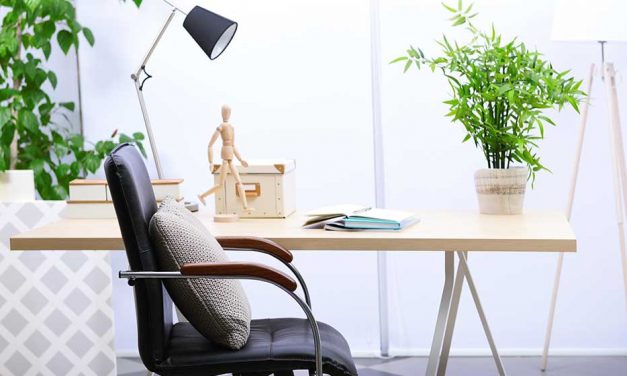 10 office plants that will stick around longer than a millennial