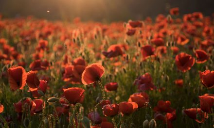 What's open Anzac Day 2019?