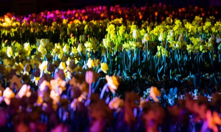 Floriade Reimagined: 1 million bulbs through the City