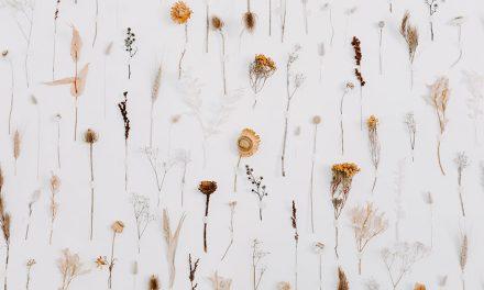 Wiluna's Floral Wonderland – Nectar