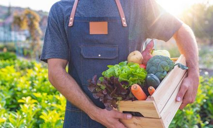 Seasonal boxes – the new way to shop produce