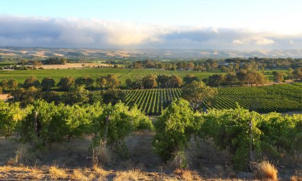Local Wineries Worth Visiting
