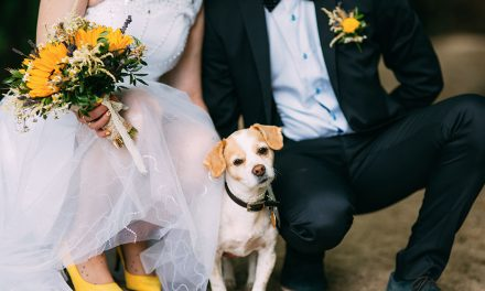 Say 'I Do' with your Pooch by your Side: Introducing Mercure Pet-Friendly Weddings
