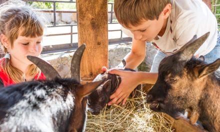 5 Farms for Family Fun