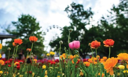 Don't forget Floriade is still on!